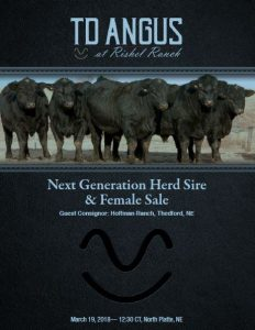 TD Angus at Rishel Ranch: Next Generation Herd Sire & Female Sale, registered purebred angus cattle for sale